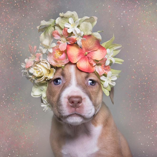 Menhelyi kutyusok találtak gazdára egy mesés fotósorozatnak köszönhetően