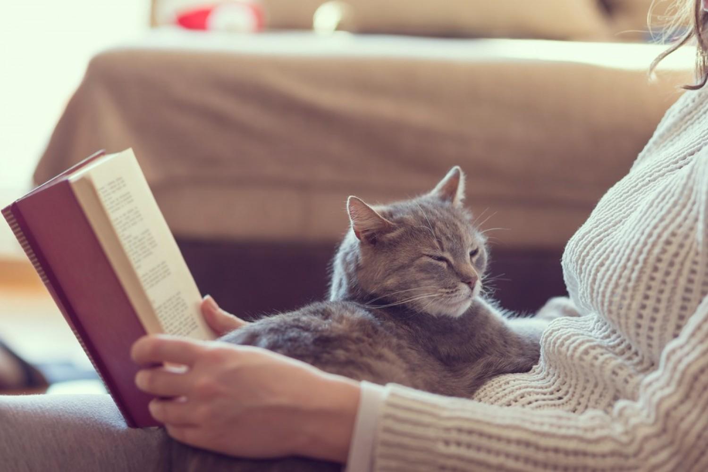 A macska gyógyító - ezért ül mindig oda, ami éppen fáj neked!