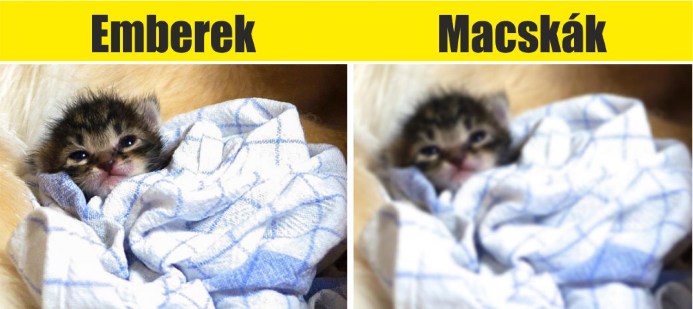10 kép ami segít az állatok szemével látni!