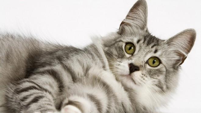 10 meglepő és titkos viselkedés, amivel cicád azt üzeni neked: szeretlek