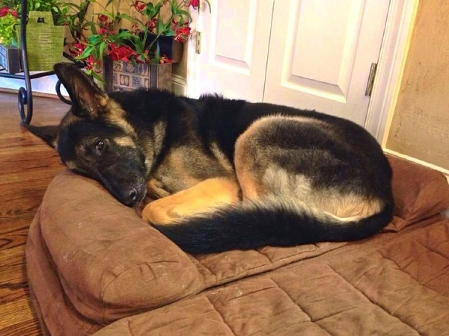 A kutya esténként bámulja az alvó gazdáit, majd később kiderül a szomorú igazság!