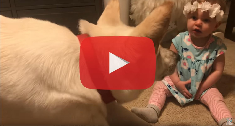 A kislány ad a kutyának egy puszit, a kutya pedig....