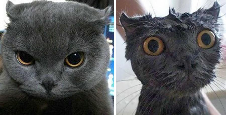 Ezeket látnod kell! Macskák fürdés előtt és után