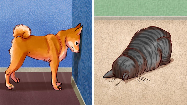 Íme 7 ok amiért a háziállatok a falnak nyomhatják a fejüket