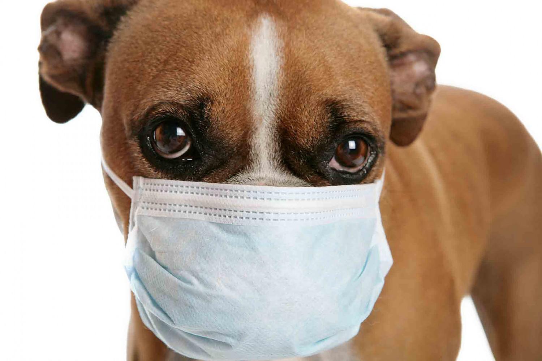 """Veszélyben a kedvencünk! """"Parazitajárvány"""" fenyegeti a kutyákat"""