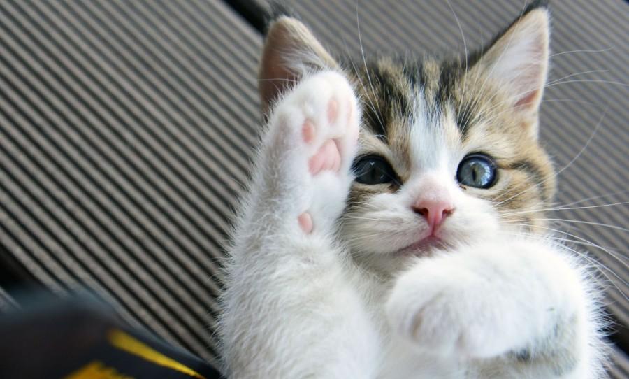 A macskád szerint te is egy nagy cica vagy
