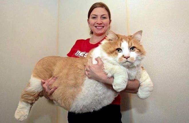 9 Gigantikus méretű macska
