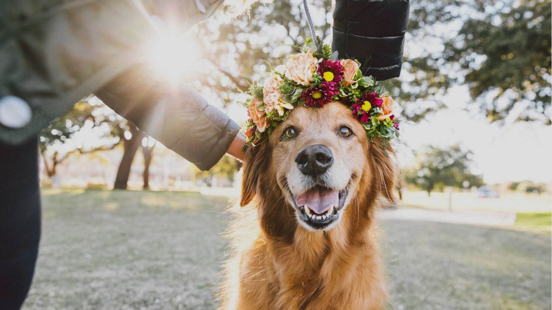 5 dolog, amit kutyagazdiként tudnod kell!