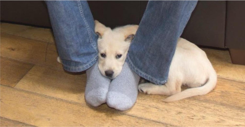 Ezért is fekszik a kutya a lábadra – Ezt nem tudtuk...