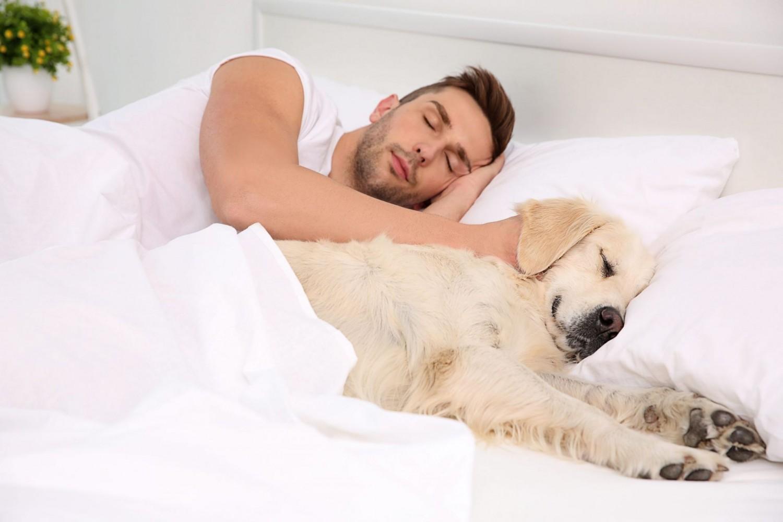 7 ok, amiért kifejezetten jó ha kutyusoddal alszol!