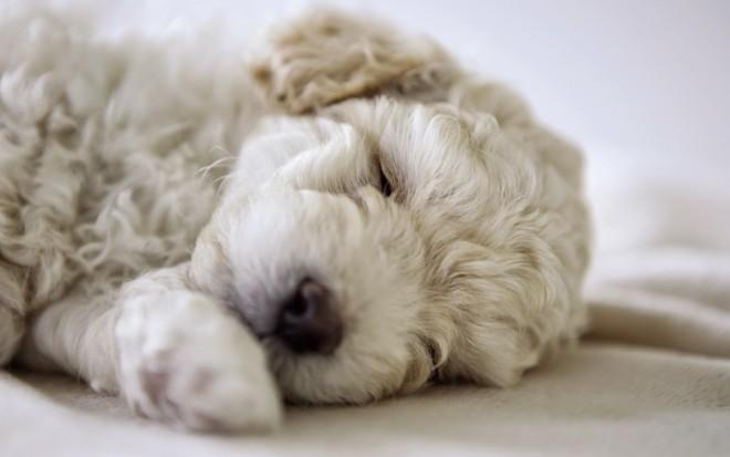 A csillagjegyed szerint milyen kutya illik hozzád? - Kattints a cikkre és nézd meg!