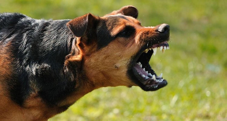 A legjobb dolog, amit kutyatámadáskor tehetsz!