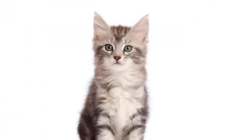 Így fejlődik egy macska - Videó a születéstől 10 hónapos korig