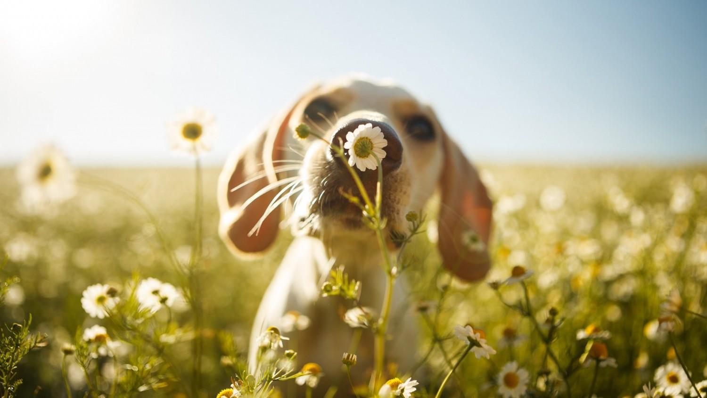 3 Immunerősítő gyógynövényes recept a kutyádnak