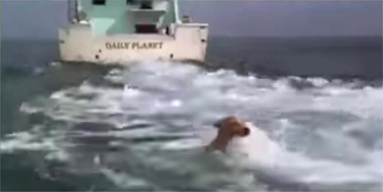 Ez a kutyus beleesett az óceánba, hihetetlen ami utána történt