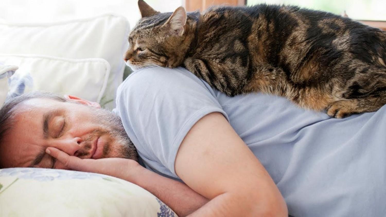 Ezért szeretnek a cicák rajtunk aludni