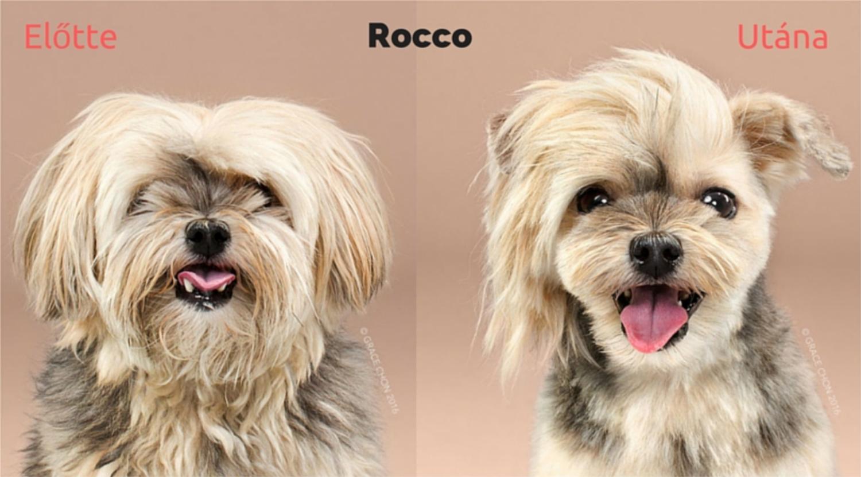 Fotók 8 cuki kutyusról, kozmetika előtt és után