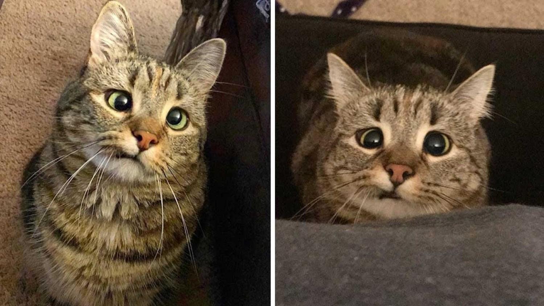 Mindenki imádja Olive-t a kancsal cicát