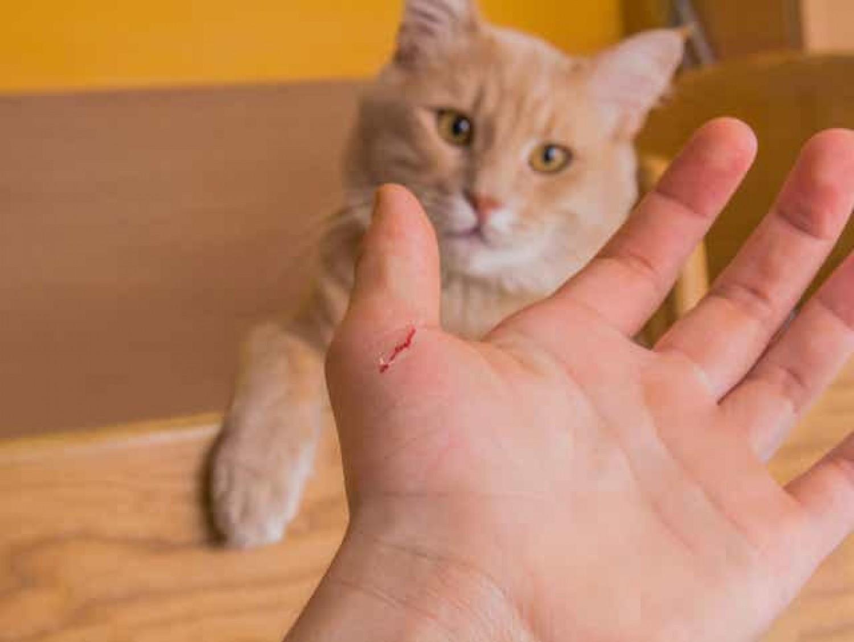 Megbetegedhetünk a macska karmolásától?