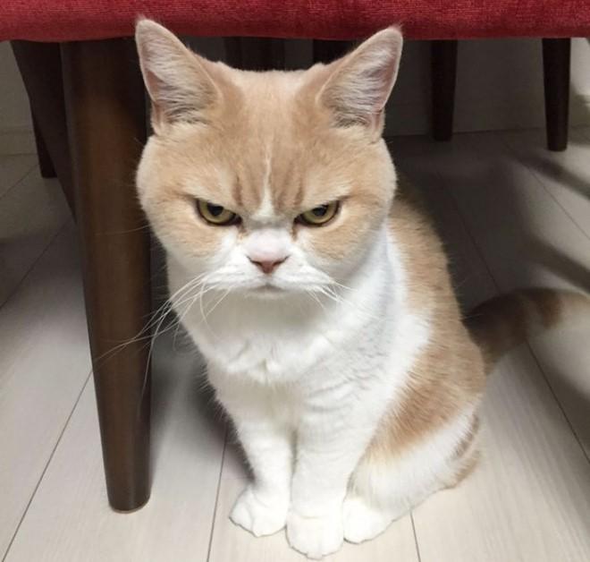 A világ legmorcosabb cicája