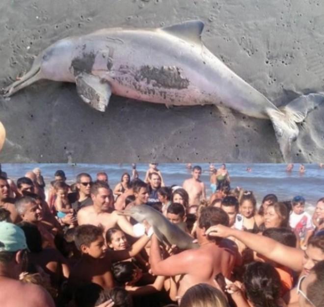 Elpusztult a partra vetődött delfin mert segítség helyett szelfizgettek vele