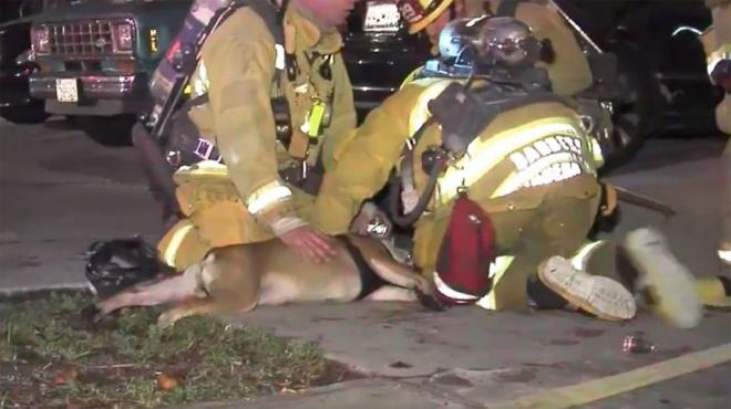 Bátor tűzoltók mentettek ki egy kutyát a lángok közül