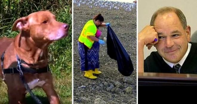 A kreatív büntetéseket kiszabó ohiói bíró kiállt a kutya jogai mellett