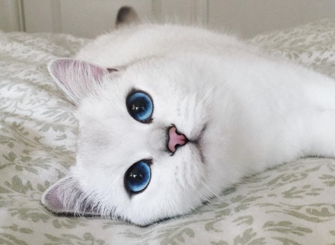 Ebbe a hihetetlenül gyönyörű szemű cicába te is azonnal beleszeretsz