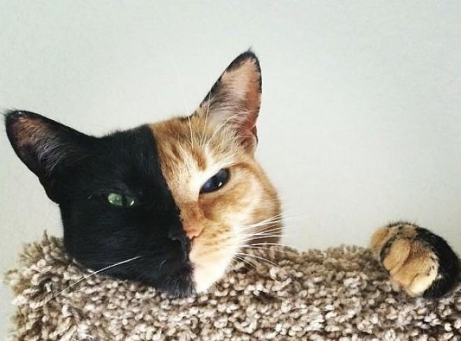 Vénusz a kétarcú cica