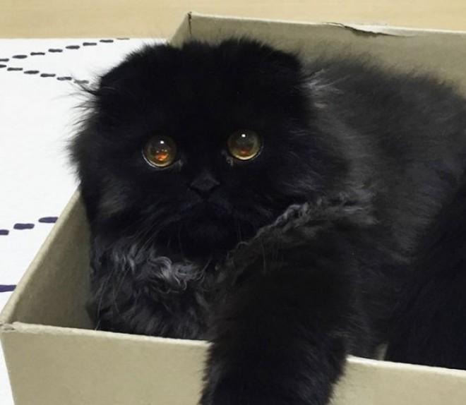 Fekete pamacs hatalmas szemekkel