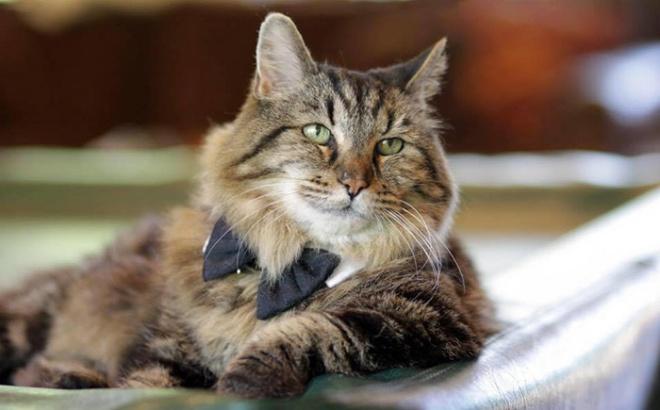 A világ legidősebb macskája most 26 éves