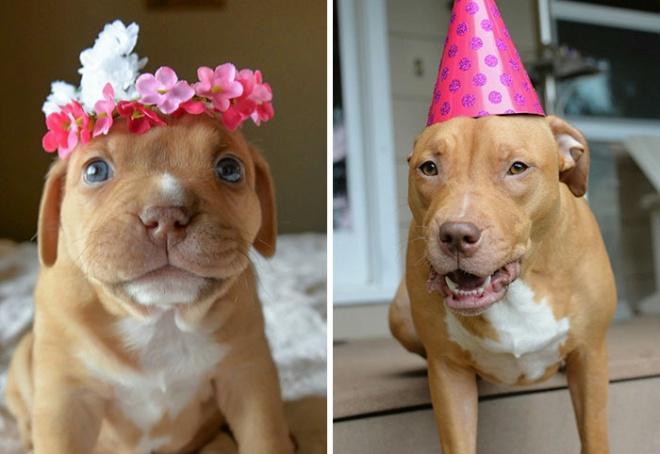 Élete első szülinapját ünnepli a koraszülött kutyus, akiről nem hitték, hogy egyáltalán életben marad