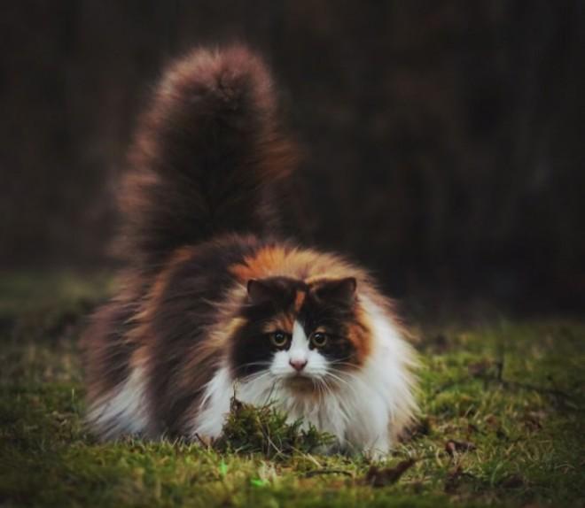 Bolyhos cicák gyűjteménye
