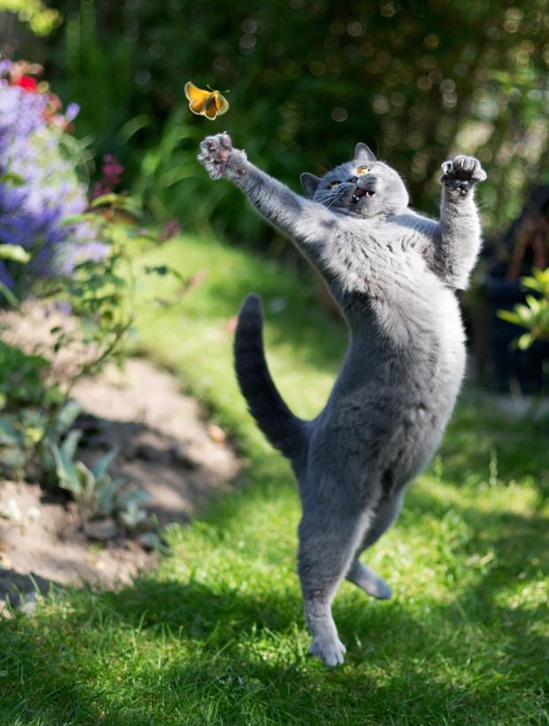 Nindzsaként ugró macskák