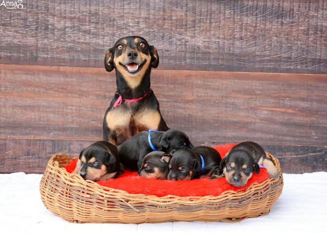 A fotózás után egy napra rá születtek meg a várandós kutyus kölykei