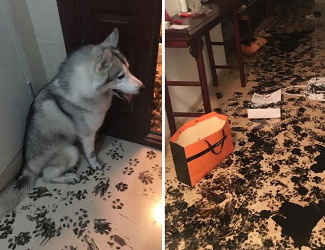 A kutyus, aki átdekorálta az egész lakást