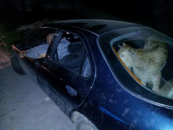 A jászapáti rendőrök csomagtartóból mentettek ki ellopott bocikat