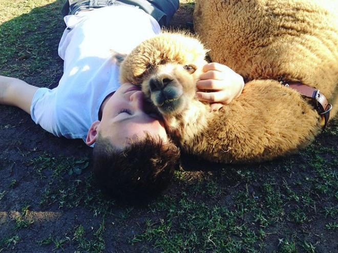 A szerencsés kisfiú kutya helyett egy alpakát kapott háziállatnak