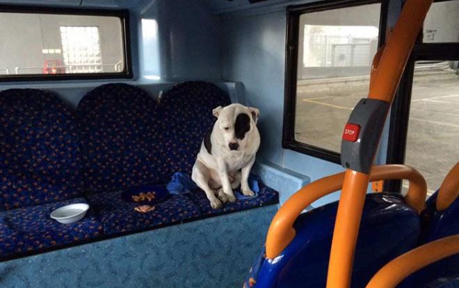 ELKÉPESZTŐ! Egy buszon hagyták gázadái magára az összetört szívű kutyust