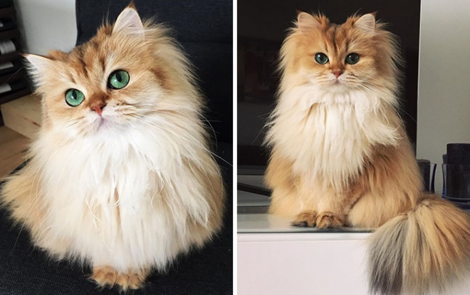 Smoothie, a világ legfotogénebb cicája