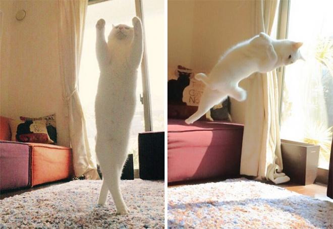 Elképesztő koreográfiát produkál ez a cica amikor egyedül van otthon