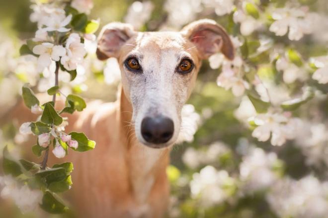 Egy fotós megmentett kutyák képeivel hívja fel a figyelmet a a versenyek veszélyeire