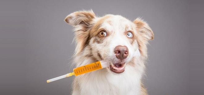 Kutyás gazdik figyelem! Halálos szívférgesség fenyegeti a kutyákat