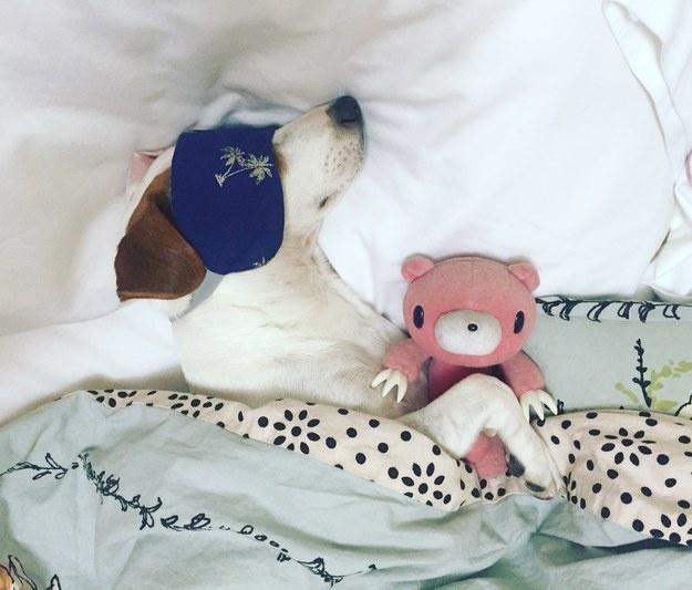Elkényeztetett kutyusok, akik nem hajlandók saját ágyukban aludni