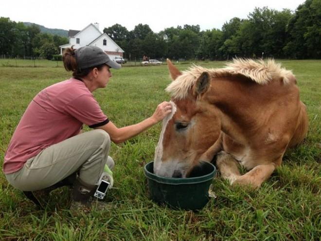 Ez a nő mentette meg a 30 éves csontsoványra fogyott lovat