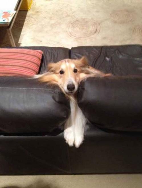 Kutyusok akiknek fogalmuk sincs, hogy mire való a kanapé