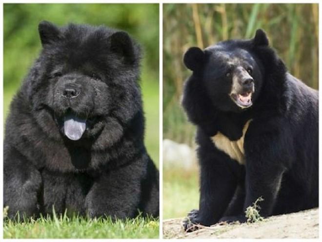 ELKÉPESZTŐ! Két év után jött rá, hogy kutyái valójában medvék