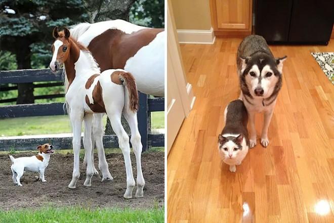 Állati jó párosok, akik le sem tagadhatnák a hasonlóságot!
