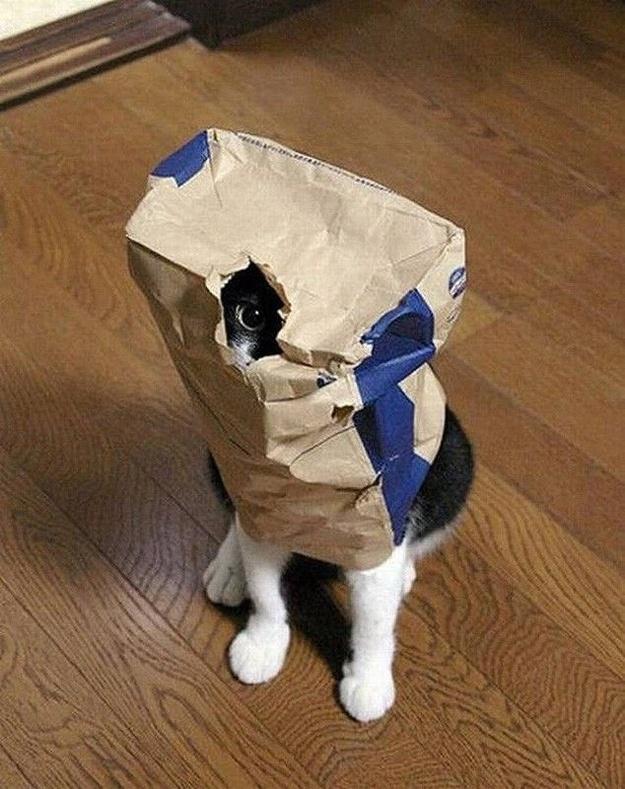 Macskák mindenhol…