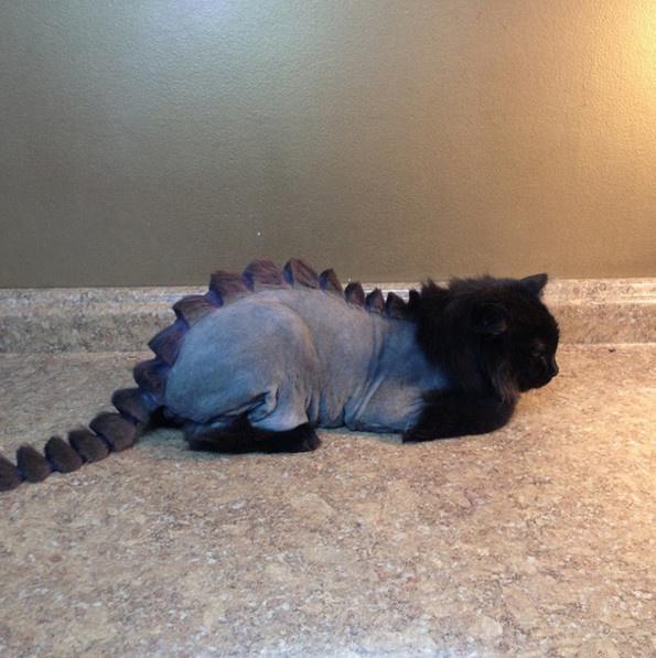 Extrém macska frizurák